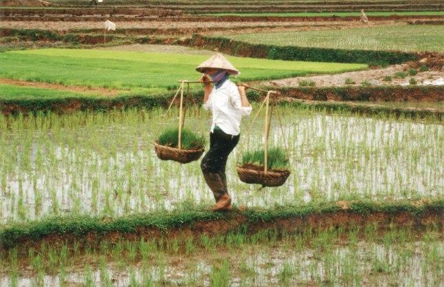 Farmer_in_Vietnam